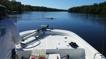 dolphins-feeding