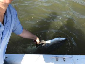 Shaking the Shark's hand