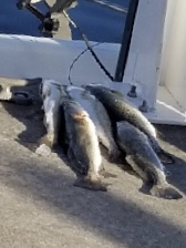 jim trout