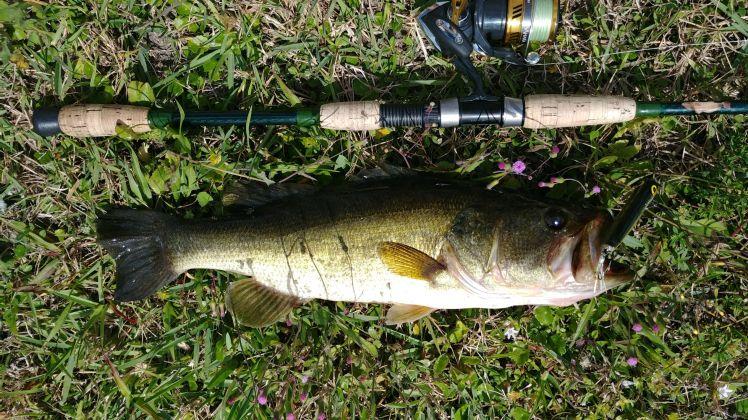 Canal Bass